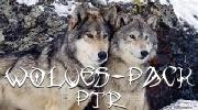 Wolves Pack PTR